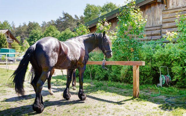 Ökodeckschicht in einer Pferdezucht
