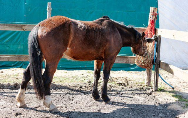 Wybieg dla koni