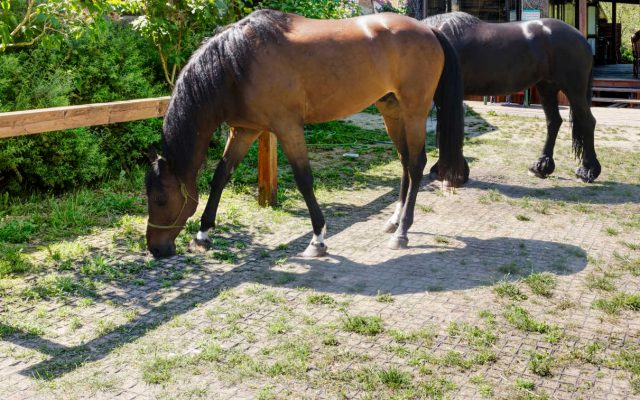 (Polski) geoSYSTEM – nawierzchnia dla koni